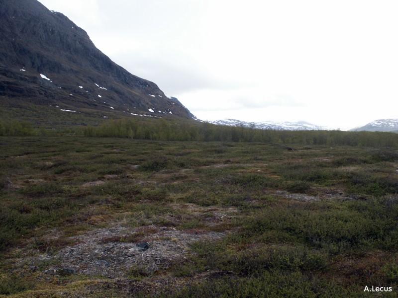 Herbes, mousses et lichens