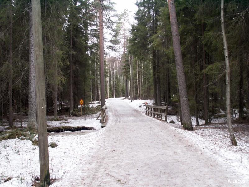Forêt finlandaise
