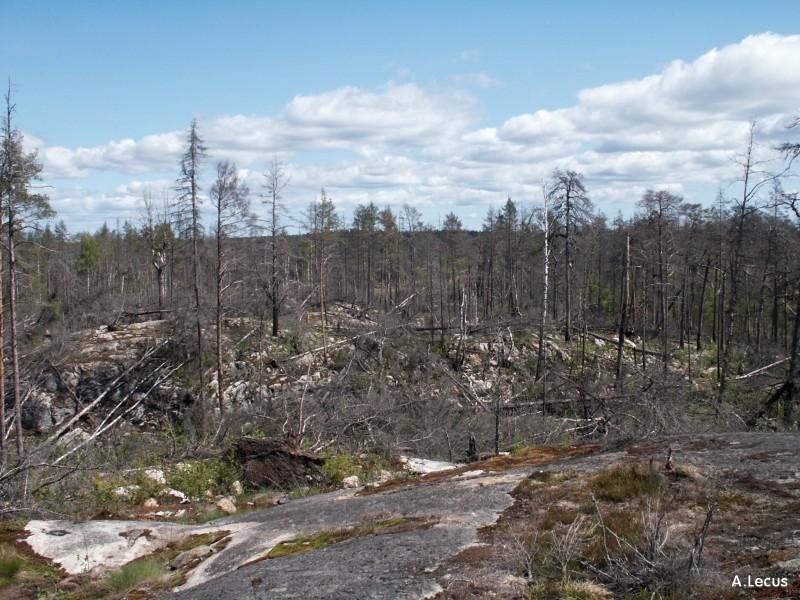 Forêt calcinée