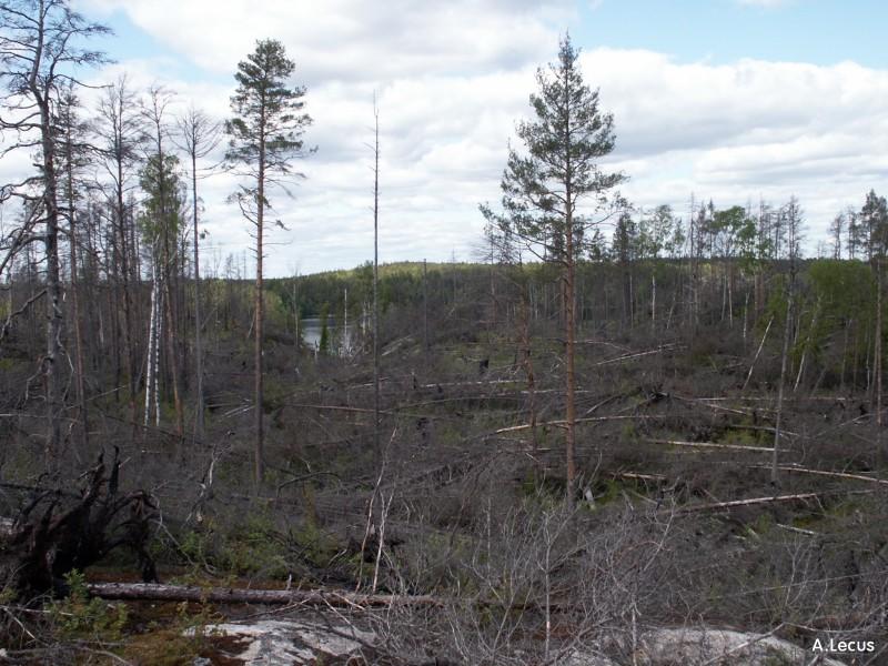 Forêt incendiée
