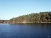 Forêt au bord de l'eau